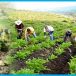 Gobierno regional desarrollará III mesa Agraria con MINAGRI donde exigirá mejoramiento del sistema de riego para Apurímac