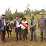 Gobernador de Apurímac entrega ganado vacuno mejorado a ganadores del PROCOMPITE en Huancarama, Andahuaylas