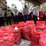 101 mil kilos de semilla de papa básica y certificada para agricultores de 5 provincias.