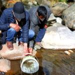 Siembran más de 5 mil alevinos de Trucha Arcoíris en Comunidad de Colca, Aymaraes
